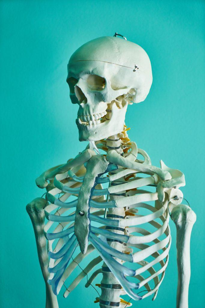 organ gerak hewan dan manusia